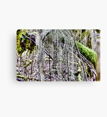 Rain Forest  Leinwanddruck