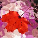 Autumn Leaf on a Wet Table by SummerJade