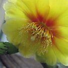 prickley pear flower by sowabisabi
