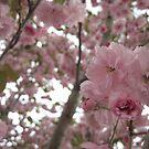 bloom by sowabisabi