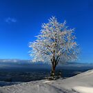 Tree With a View by Luke Griffin