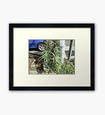 Aloe, Rustenburg, Gauteng, South Africa Framed Print