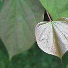 shiny gold heart leaf by sowabisabi