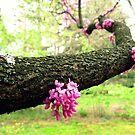 blooming arm by sowabisabi