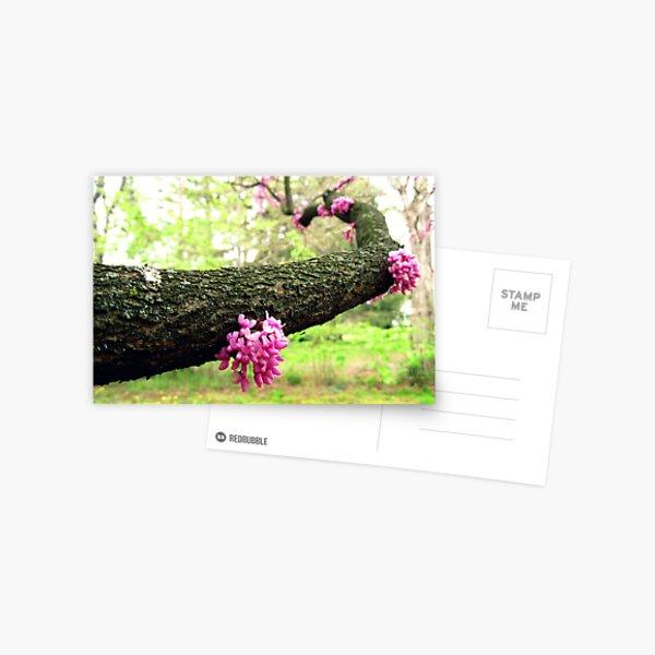 blooming arm Postcard