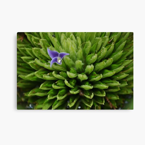 just one bloom Canvas Print