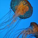 Sea anenomes by TrueInsightsNZ
