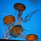 Sea anenome III by TrueInsightsNZ