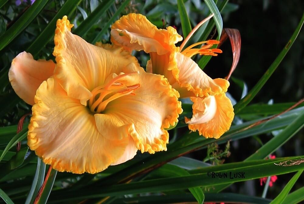 Daylily Beauty by waterlily15