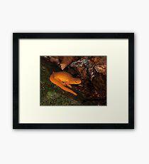 Eastern Newt on Forest Floor Framed Print
