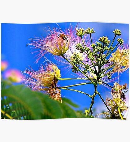 Silk Tree Buzz Poster