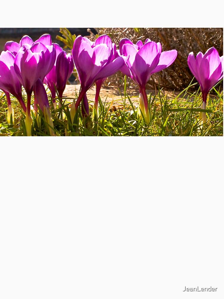 lilac crocuses in spring by JeanLender