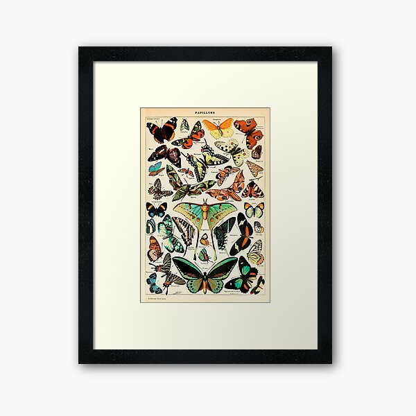 Papillon I Vintage French Butterfly Charts by Adolphe Millot Framed Art Print