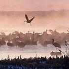 Just Birds by kurtbowmanphoto