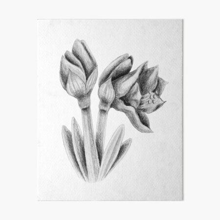 Black and white Amaryllis Art Board Print