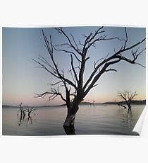 """Ghost tree"" - Lake Eucumbene Poster"