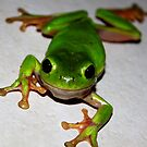 Are you looking at me? War Frog by Cathie Trimble
