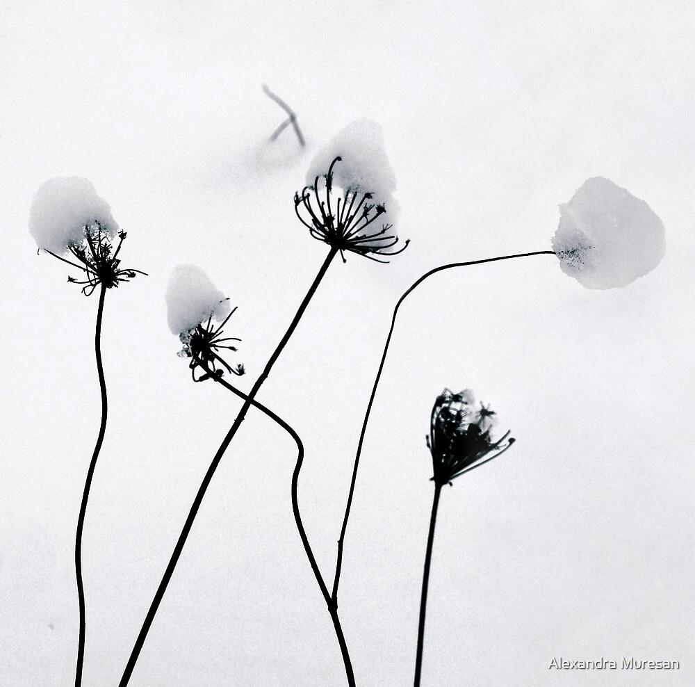 Winter Flowers by Alexandra Muresan