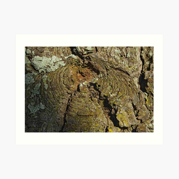 Barkscape: volcanicus Art Print