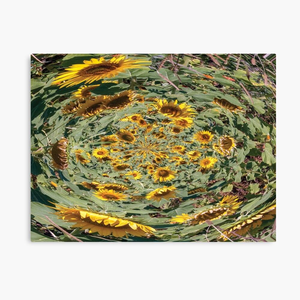 sunflowers vortex Canvas Print