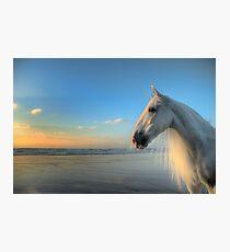 The Sea Horse Photographic Print