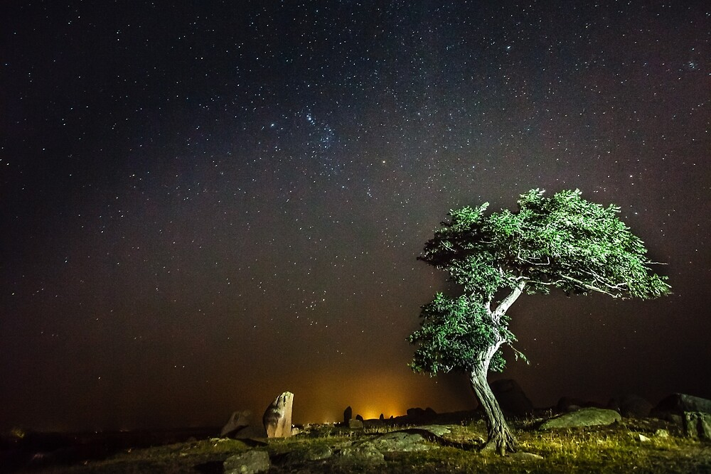 Night Tree by Russell Charters