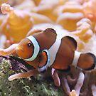 """Where's ....?"" - clownfish by ArtThatSmiles"
