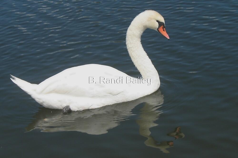 Swan symmetry by ♥⊱ B. Randi Bailey