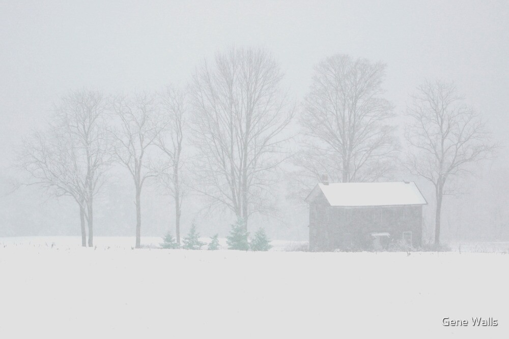 Whiteout at the Forgotten Farmhouse by Gene Walls