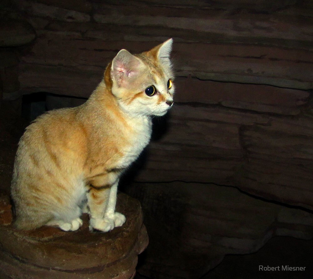 """""""Is This Pose Good For You"""" (Sand Cat) by Robert Miesner"""