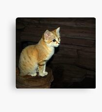 """""""Is This Pose Good For You"""" (Sand Cat) Canvas Print"""
