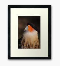 Crested Caracara Framed Print