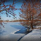 Frozen Lake by G. David Chafin