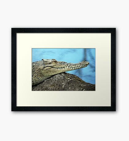 American Crocodile (Crocodylus actus) - Costa Rica Framed Print