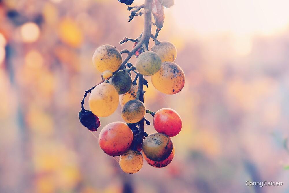 Racimo de uvas by Constanza Barnier