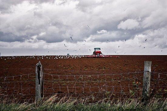 Autumn Somerset Ploughing