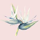 white bird of paradise on pink by youdesignme