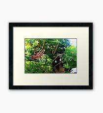 Lush foliage  Framed Print