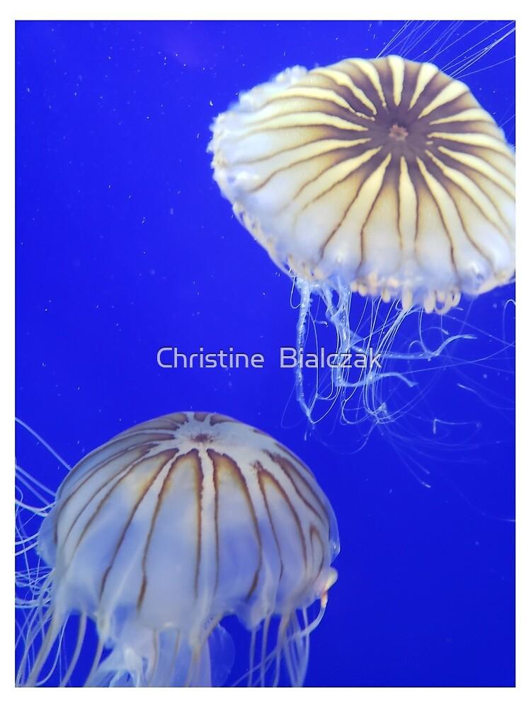 2 Jellyfish together by stinewriting