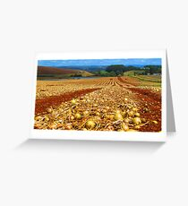 Flowerdale Onions Drying Greeting Card