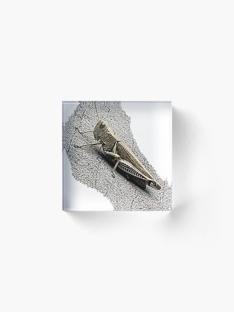 Alternate view of Mechanic Grasshopper Acrylic Block