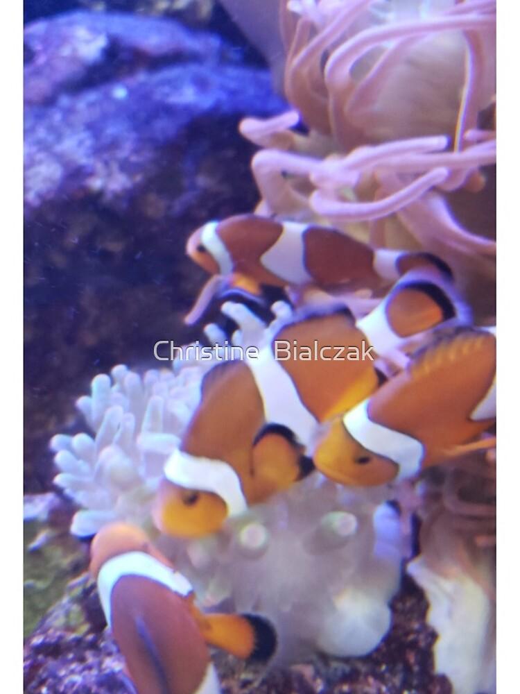 clownfish by stinewriting
