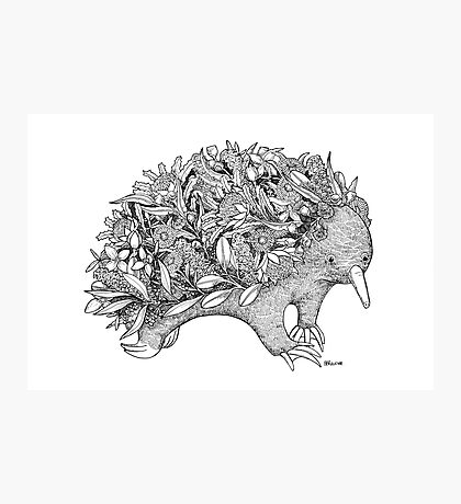 Botanical Echidna Photographic Print