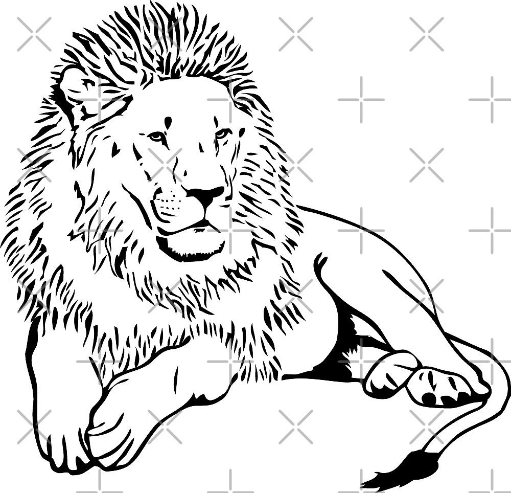 lion by Port-Stevens