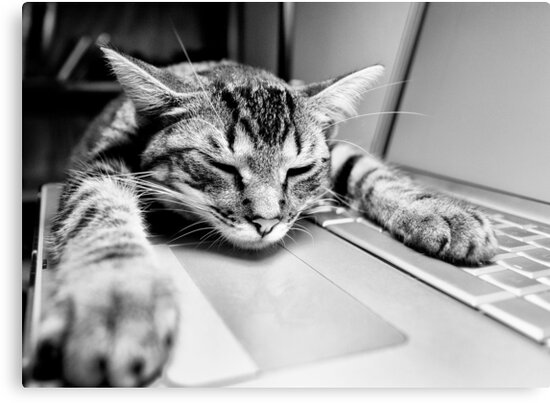 Sleeping @ Work by Richard Lam