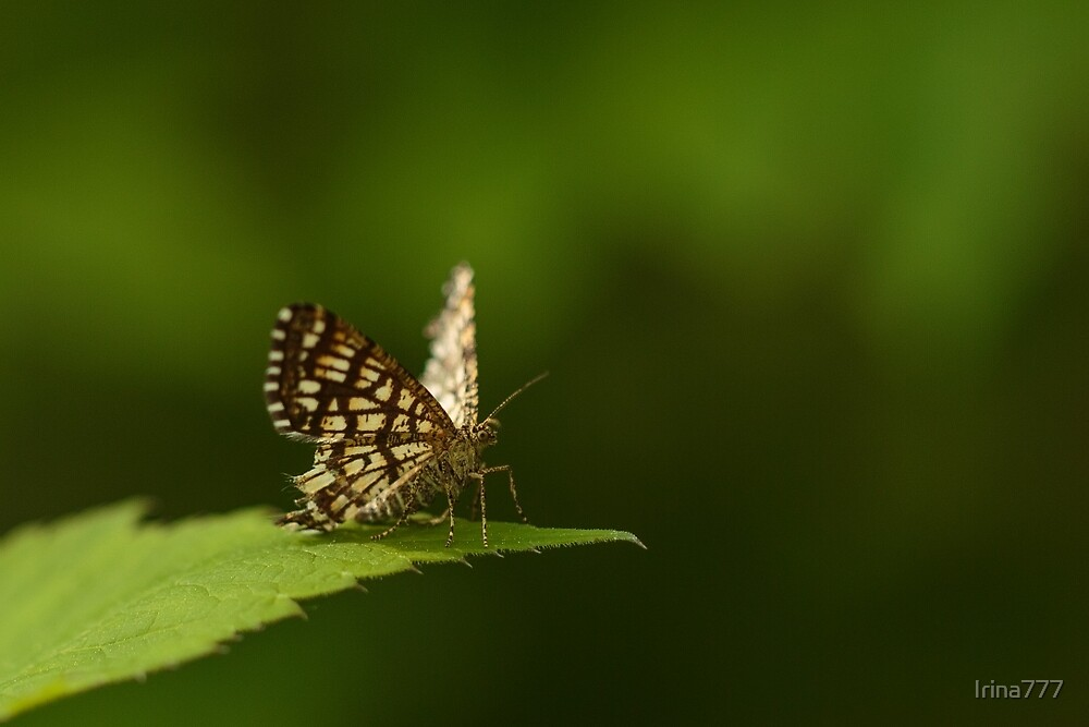 A Small butterfly by Irina777