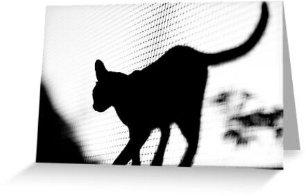 Feline Silhouette by Richard Lam