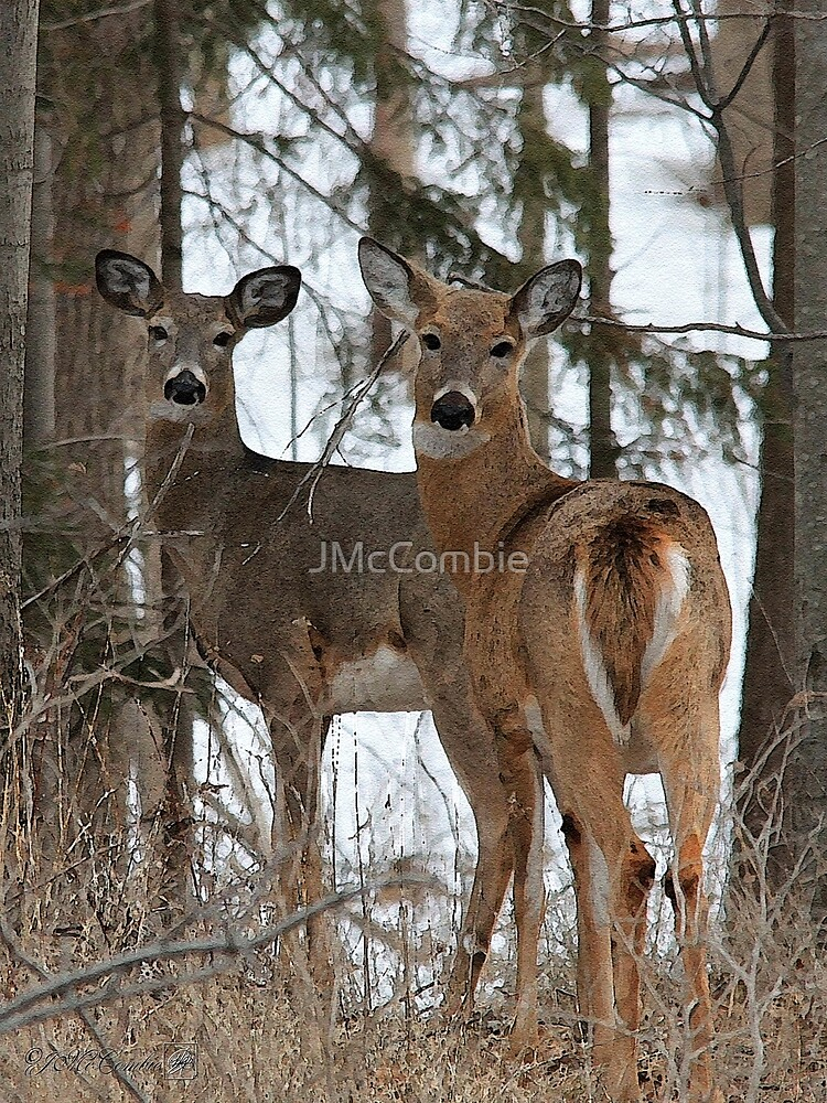 White-Tailed Deer by JMcCombie