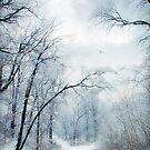 Winter's Cloak by Jessica Jenney