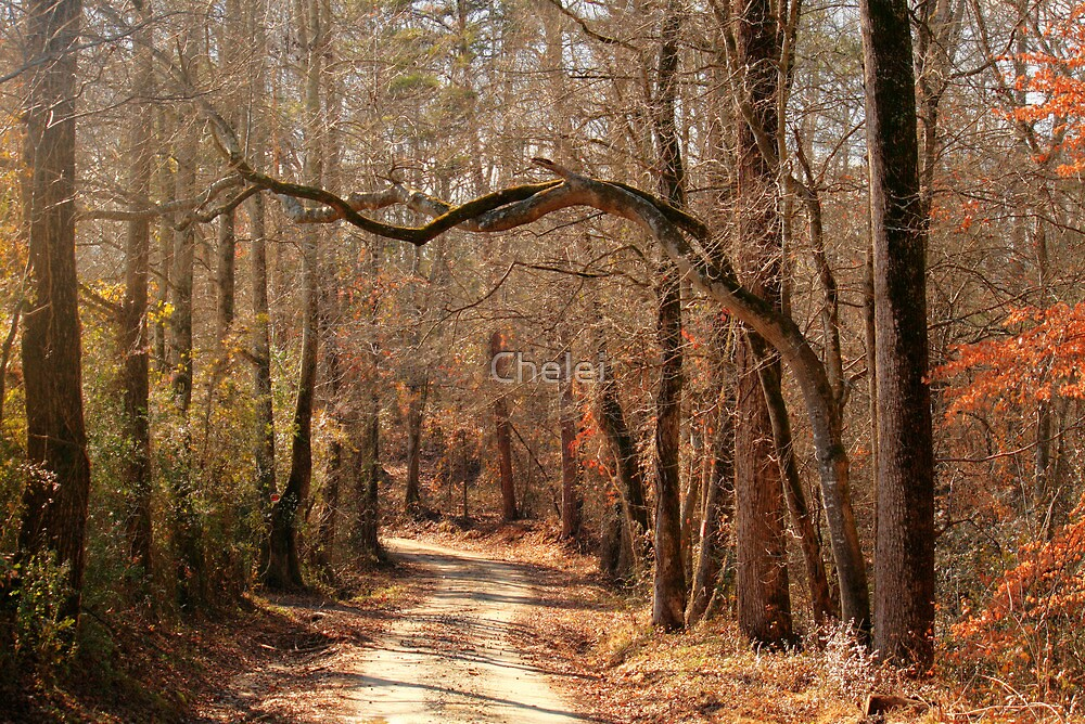 Twisted Trees by Chelei
